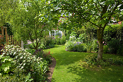 Looking down the garden towards the house. Curving lawn and borders. Liriodendron tulipifera in the foreground -  tulip tree.