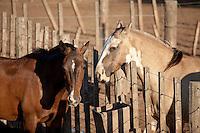 CABALLOS Y ALAMBRADO, CARMEN DE ARECO, PROVINCIA DE BUENOS AIRES, ARGENTINA