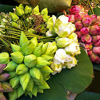 Asia, India, Calcutta. Indian Lotus bunches at Calcutta Flower Market.