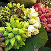 Asia, India, Calcutta. Indian Lotus bunches at Calcutta Flower Market.