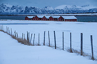 Fence and boatsheds in winter, Delp, Austvågøy, Lofoten Islands, Norway