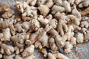 Old Delhi, Daryagang fruit and vegetable market - ginger root on sale, India