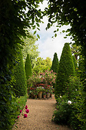 An arbour of Hornbeam leading to a tiered group of Fuchsia filled terracotta pots at East Ruston Old Vicarage, East Ruston, Norwich, Norfolk, UK