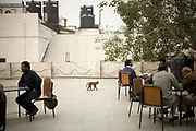 A monkey walks between table of customers on the terrace of the Indian Coffee House, Baba Kharak Singh Marg, New Delhi.<br /> The Coffee House dates back almost fifty years, first in central Connaught Place, then Janpath and now at the top of a rather shabby shopping centre. Still run by the Indian Coffee Workers Cooperative Society, it was a regular haunt for politicos in Delhi and It's clientelle is still well read and intellectual.