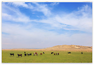 A Wyoming cattle ranch on a sunny day, USA