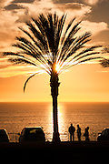 Palm tree silhouetted at sunset in Dana Point, California