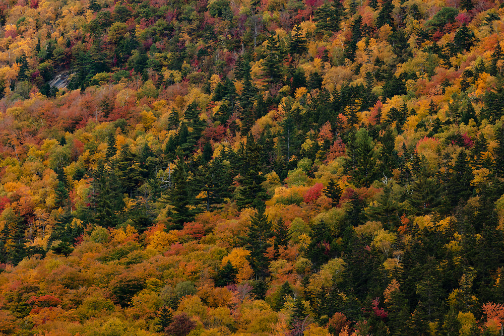 Vibrant autumn colors in the rugged terrain of Crawford Notch.