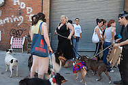 New York , dogs parade  and contest in Brooklyn organised by BARC , / defile concours de Chiens a Brooklyn. BARC dog show.  un organisme de protection des chiens