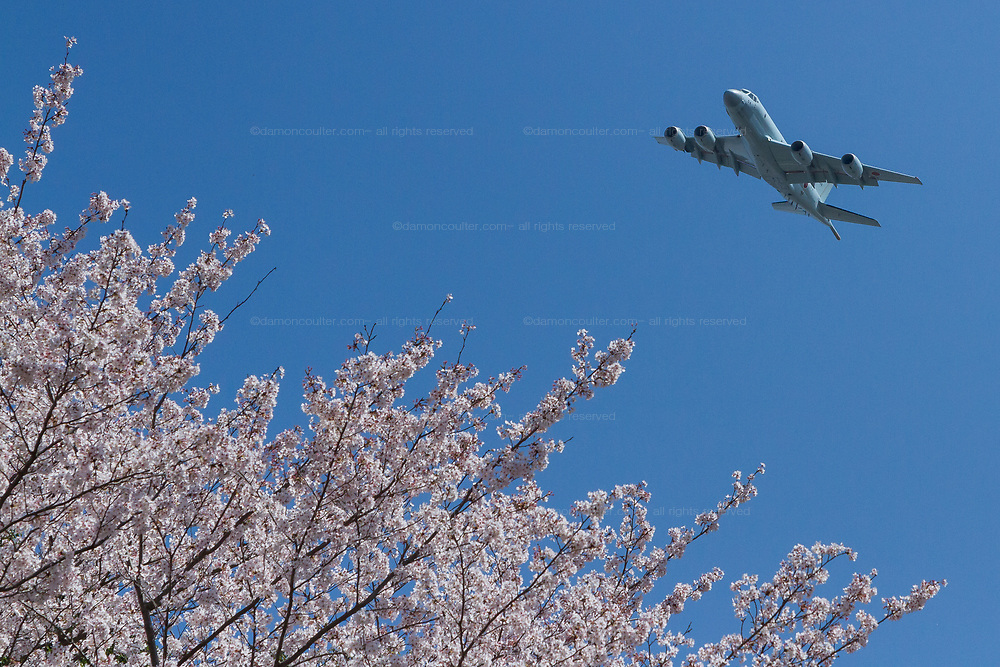 A Kawasaki P1 Maritime patrol aircraft, with the Japanese Self Defence Force (JSDF) flies over Sakura or cherry blossom in a park in Tsuruma, Kanagawa, Japan. Friday March 30th 2018. The spectacular displays of spring cherry blossom arrived in Japan earlier than usual, catching many people off guard. The first week of April will probably be the last chance people in Tokyo/Yokohama have to enjoy Ohanami or cherry blossom viewing picnics