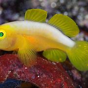 Marine Life   Milne Bay