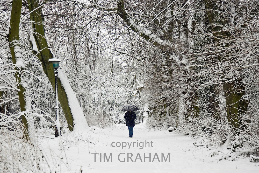 Walker strolls with umbrella across snow-covered Hampstead Heath, London, United Kingdom