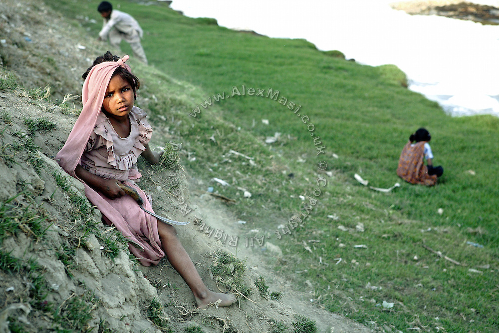 A young girl from the village of Beghrajpur, Muzaffarnagar District, Uttar Pradesh, India, is collecting grass for her family's buffaloes from the banks of a large drain originating from the Beghrajpur Industrial Complex, mainly composed of chemical factories, a few hundred meters upstream, on Sunday, Mar. 30, 2008. The white drain, completely covered in foam, will reach the Kali river (East) in Usampur Bhopara village. At the end of its journey, the watercourse will eventually join the largest Ganges river injecting a deadly dose of pollutants into its Holy waters.