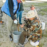 Duck banding and avian influenza testing, Deer Flat National Wildlife Refuge, Lake Lowell