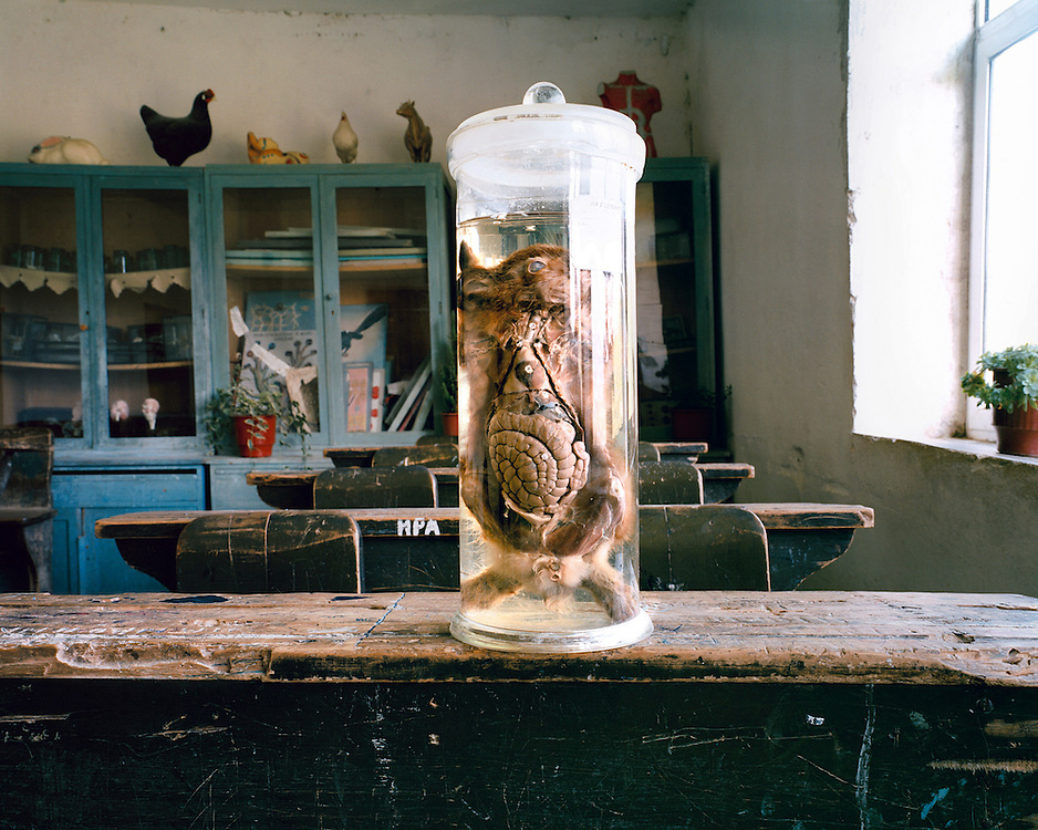 Livadia, school. A disected hare. When I photographed this display the director of the school asked for a huge amount of money. He said that no one outside Albania has ever seen such a thing. He chased me through the village.