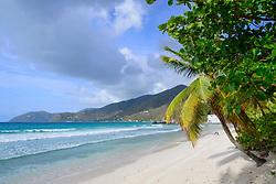 Sandstrand mit Palme, Sandy Beach and palm tree, Insel Tortola, Tortola Island, Britische Jungferninsel, Karibik, Karibisches Meer, British Virgin Islands, BVI, Caribbean Sea
