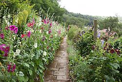 The hollyhock border at Sleightholmedale, Yorkshire