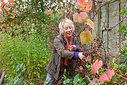 Carol Klein taking cuttings from Vitis coignetiae