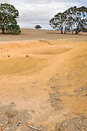 Drought in Western Victoria.<br /> <br /> Larger JPEG + TIFF images available by contacting use through our contact page at :..www.photography4business.com