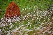 Jeceaba _ MG, Brasil...Casa de cupim em uma paisagem em Jeceaba...The termite mound in the landscape in Jeceaba...Foto: JOAO MARCOS ROSA /  NITRO