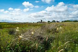 Holy Island, Lindisfarne, Northumberland, England, UK<br /> Photo: Ed Maynard<br /> 07976 239803<br /> www.edmaynard.com
