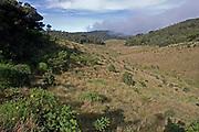 View of Horton's Plains National Path showing upland grassland and montane forest vegetation, Sri Lanka