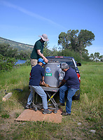 Elliott Barnhart, top, of the United States Geological Survey and Scott Jensen and Roman Marin III of the Monterey Bay Aquarian Research Institute unload the 400-pound eDNA testing device before installing it in a stream flow monitoring site June 16 just downstream of Palisades Reservoir.