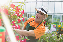 Male gardener looking at plant in greenhouse, Augsburg, Bavaria, Germany