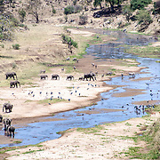 The Tarangire River is one of two main water sources for animals in the dry season at Tarangire National Park in northern Tanzania not far from Ngorongoro Crater and the Serengeti. In this shot, elephants, zebras, and cranes congregate at a bend in the river.