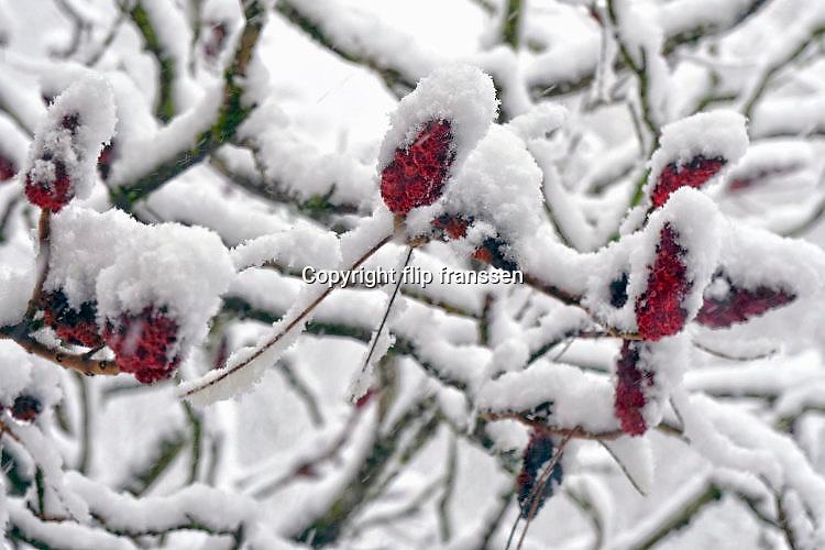 Nederland, Ubbergen, 10-12-2017 Het eerste dikke pak sneeuw van deze winter is gevallen bij Nijmegen. Foto: Flip Franssen