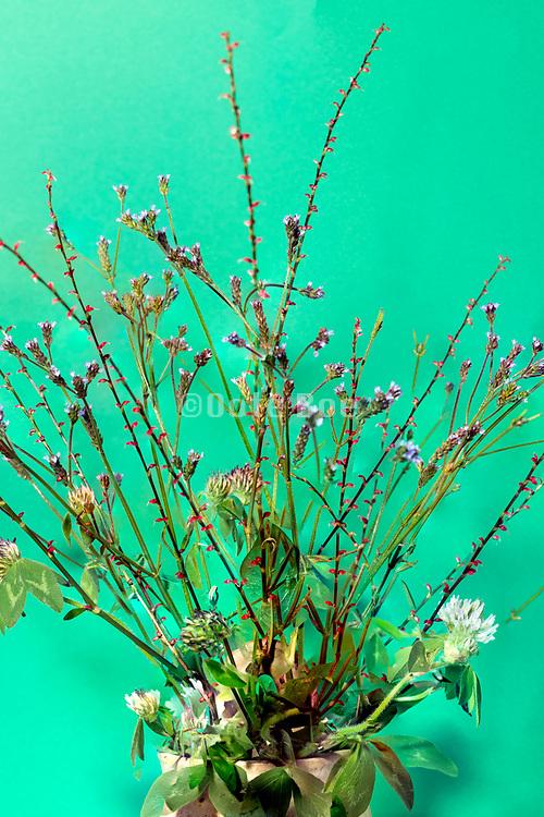 plant twigs composite still life