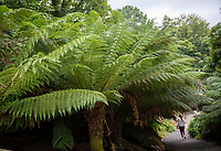 Lost Gardens of Heligan The UK's only outdoor Jungle by Brian Jordan