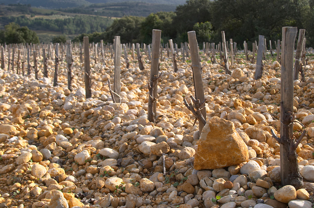 """Big rocks called """"tetes de mort"""" head of dead people or skulls. Domaine Saint Sylvestre in Puechabon. Terrasses de Larzac. Languedoc. Vines trained in Gobelet pruning. Young Mourvedre grape vine variety. Terroir soil. France. Europe. Vineyard. Soil with stones rocks. Galets."""