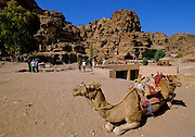"""Tourist and camels for hire abound in Petra, which was recently named one of the """"Seven Modern Wonders of the World"""" - Jordan."""