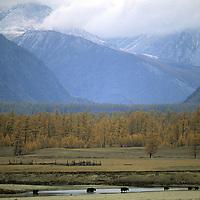 MONGOLIA, Darhad Valley. Yaks cross river below Horidol Saridog Mts.