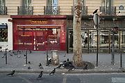 """March, 27th 2020 - Paris, Ile-de-France, France: Paris under confinement, Nicolas wine shop and pigeons,  area of high fashion, beauty, accessories, haute couture, all shops closed, in 8th arrondissement, and all public spaces virtually empty to stop the spread of the Coronavirus, during the eleventh day of near total lockdown imposed in France. The President of France, Emmanuel Macron, said the citizens must stay at home for at least 15 days, that has been extended. He said """"We are at war, a public health war, certainly but we are at war, against an invisible and elusive enemy"""". All journeys outside the home unless justified for essential professional or health reasons are outlawed. Anyone flouting the new regulations is fined. Nigel Dickinson"""