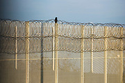 A crow sitting on a security fence. HMP/YOI Portland, a resettlement prison with a capacity for 530 prisoners. Dorset, United Kingdom.