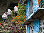 Three porters carry loads up stone stairs by marigold flowers and a bright cyan blue painted brick building, at Taglung (7152 feet / 2180 meters elevation) in the Annapurna Range of Nepal.