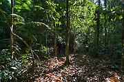 Walking the Amazon rainforest.