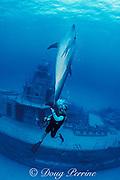 Spot, a wild, lone, sociable bottlenose dolphin, Tursiops truncatus, and pal Jason Belport on wreck of Russian destroyer M/V Captain Keith Tibbets, Cayman Brac, Cayman Islands ( Caribbean Sea )