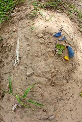 Bones On Surface Of Ground As Rains Wash Away Top Soil, Choeung Ek