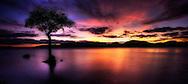 Milarrochy, Loch Lomond