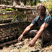 Tovolah Michael Cyrille, chief of Andranokoditra village, shows a makeshift greenhouse, nursery where his village is growing saplings of the endangered tree Humbertiodendron saboureaui Leandro for replanting in forests of his villages homeland. Madagascar.