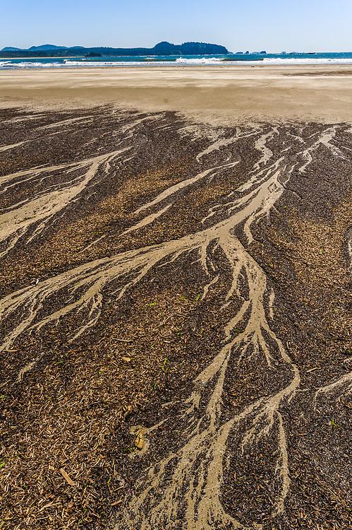 Tree bark sediment, Hobuck Beach, Makah Reservation, Pacific Ocean, Olympic Peninsula, Washington, USA