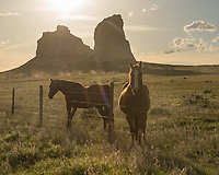 On the road to Courthouse and Jail Rock I stopped to photograph these horses in the evening light. They were very friendly, walking right up to the fence as soon as they saw me.