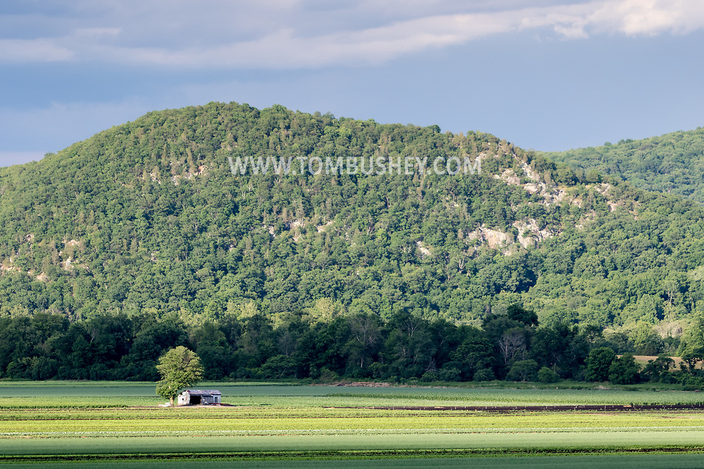 Sunlight and shadows on Black Dirt fields with Mount Adam in the background in Pine Island, N.Y.,  on June 29, 2020.