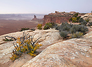The Desert landscape and foliage of Canyonlands National Park in autumn, Utah, USA