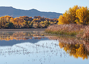 South Loop pool reflection this beautiful fall morning