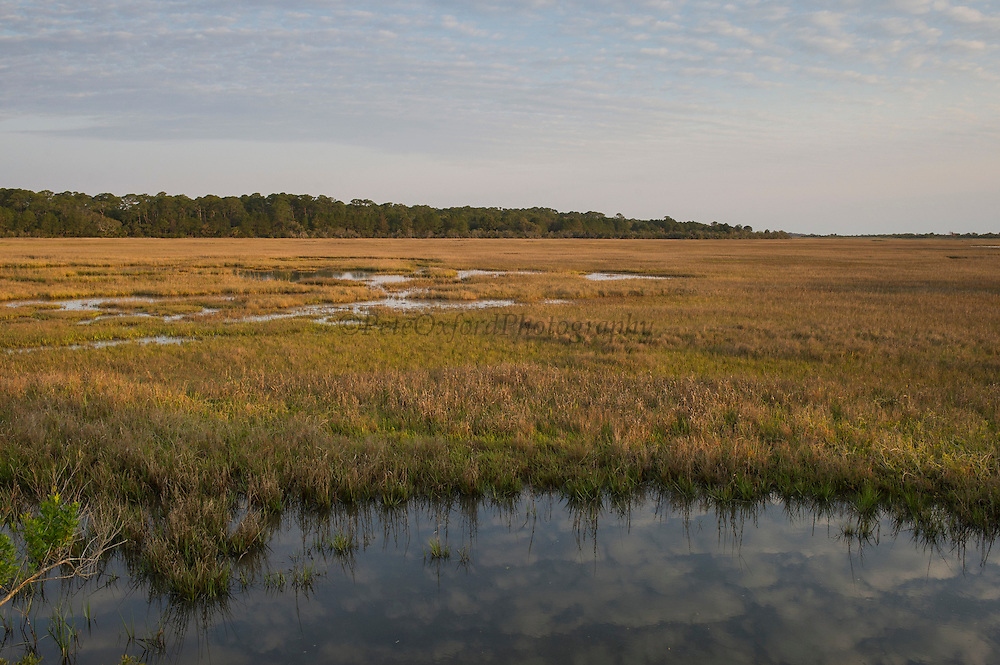 Salt Marsh<br /> Little St Simon's Island, Barrier Islands, Georgia<br /> USA