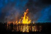 Burning sugar cane. Bella Unión, Artigas, Uruguay. July/2011.