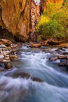 Standing in the middle of the Virgin River that carves through The Narrows in Zion National Park, you'll be presented with views through the towering canyon walls.
